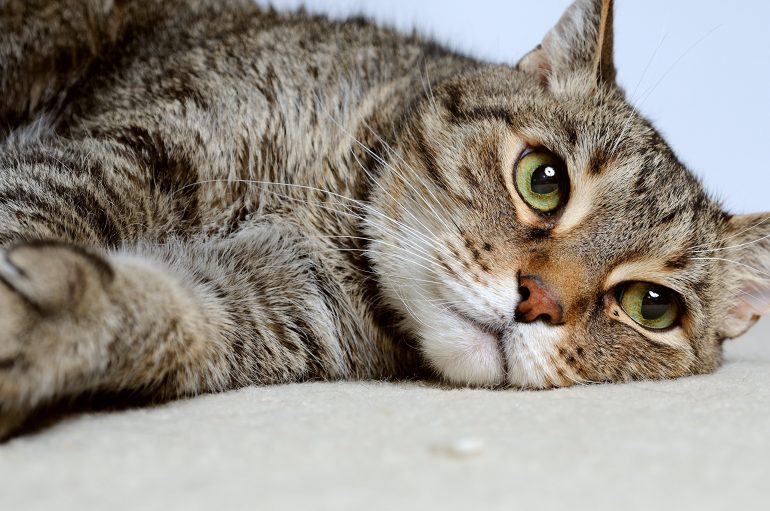11 Natural Home Remedies to Treat Your Cat Diarrhea