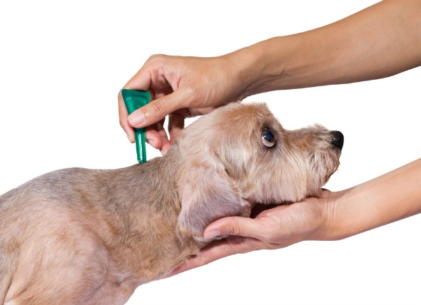 Flea medicine for dogs how it works