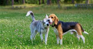 flea treatment for dogs-how to keep your yard flea frees