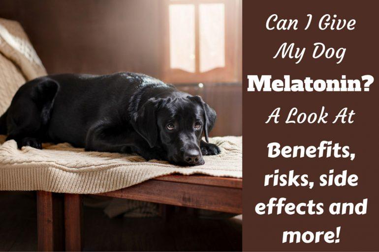 Can i give my dog melatonin and benadryl at the same time