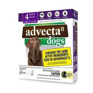 best flea dip for dogs by Advecta