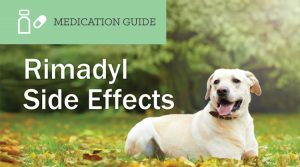 What are the Side Effects of Rimadyl for Dogs