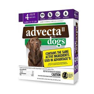 how to get fleas off a dog