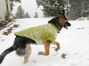 how to keep dogs warm outside
