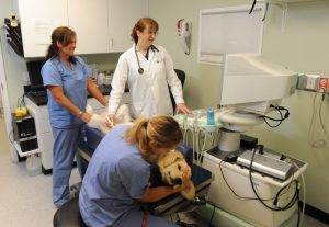 how long does a dog live with cushing's disease