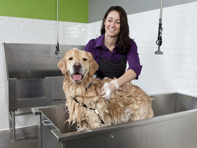 help you clean up after your dog