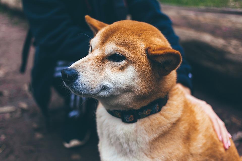 best dog collar.