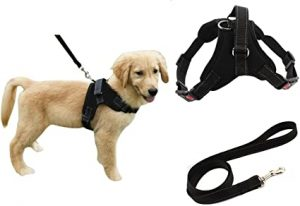 dog training tools and supplies