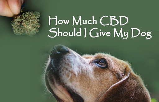 How Much CBD Oil Should I Give My Dog for Anxiety