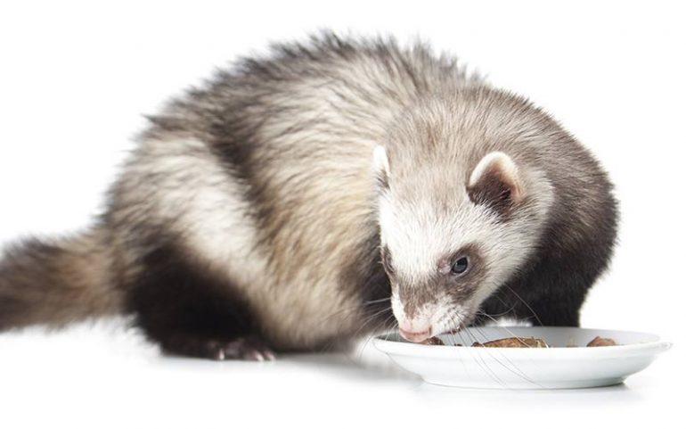 best ferret food