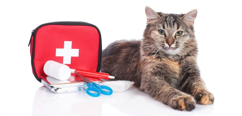 first aid checklist for pet