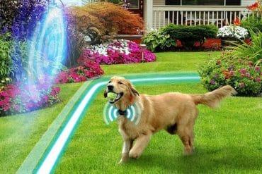 Wireless Dog Fence