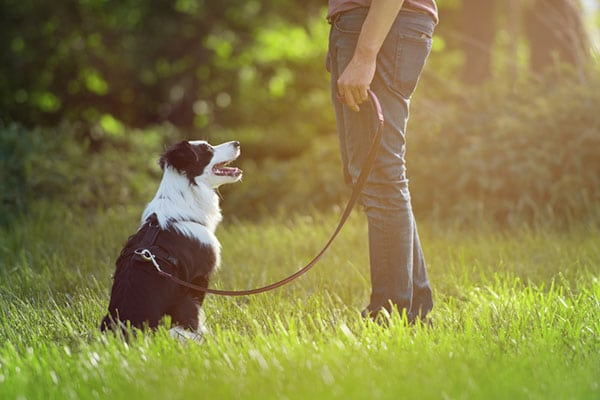 best dog training services in Delaware